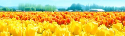 padang bunga